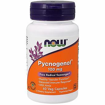 Maintenant Aliments Pycnogenol, 100 mg, 60 Bonnets de légumes
