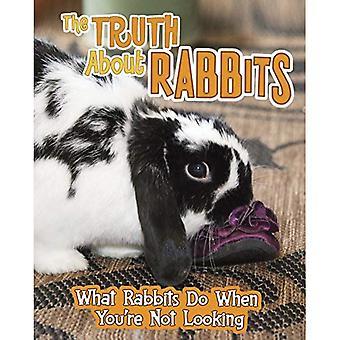 Sandheden om kaniner
