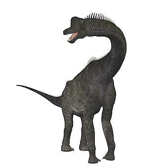 Brachiosaurus dinosaur Poster Print