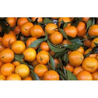 Appelsiinit Nasch markkinoiden Itävalta Juliste Tulosta, jonka Marilyn Parver
