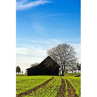 Grange et vert agricole terrain Bade-Wurtemberg Allemagne Poster Print