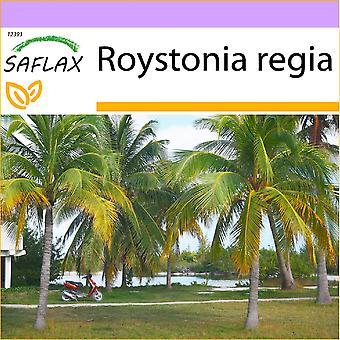 ספלקס-8 זרעים-קובה רויאל פאלם-פאלייר מלכותי דה קובה-מלון פלמה ריאלי בוקרשט-פלמרה אמיתי-קובנא קניגסברג