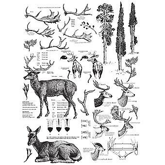 Re-Design med Prima Deer 23x33 Inch Decor Överföringar
