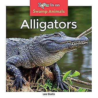 Alligators (animaux du marais)