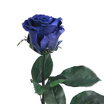 Eternal rose blue with stem durable 3 years 45-50 cm