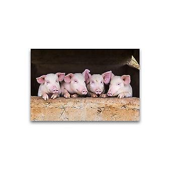 Schattige varkens die zich in rijaffiche bevinden -Beeld door Shutterstock