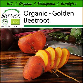 Saflax - 50 seeds - With soil - Organic - Golden Beetroot - BIO - Betterave - Jaune - BIO - Barbabietola -  Golden - Ecológico - Remolacha dorada - Goldene Rote Beete