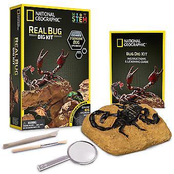National geographic jm00645 kit réel bug dig