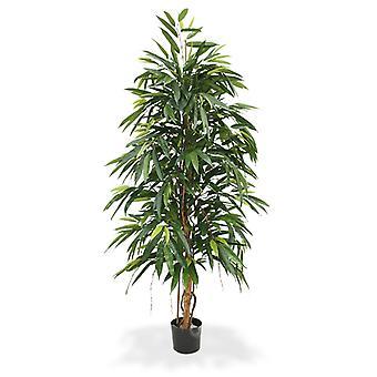 Longifolia Reale artificiale 175 cm