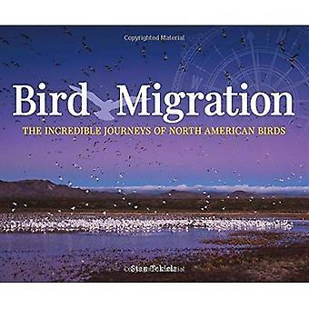 Migration des oiseaux: Les incroyables voyages des oiseaux nord-américains (appréciation de la faune)