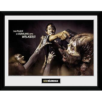 The Walking Dead Glenn Attack Framed Collector Print 40x30cm