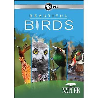 自然: 美しい鳥 【 DVD 】 アメリカ インポートします。