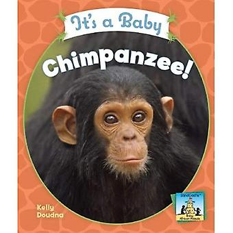 It's a Baby Chimpanzee! (Sandcastle: Baby African Animals)