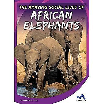 The Amazing Social Lives of African Elephants (Stories from the Wild Animal Kingdom)