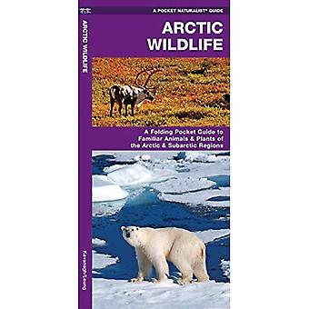 Arctic Wildlife: An Introduction to Familiar Species (Pocket Naturalist Guide Series)