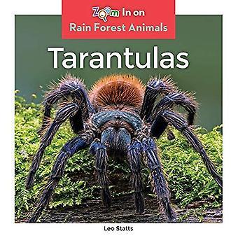Tarantulas (Rain Forest Animals)