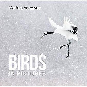 Oiseaux en images