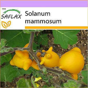 Saflax - 10 semi - amore Apple / pianta dei capezzoli - Mamelle de vache - Albero dei capezzoli - Ubre de vaca - Kuheuterpflanze