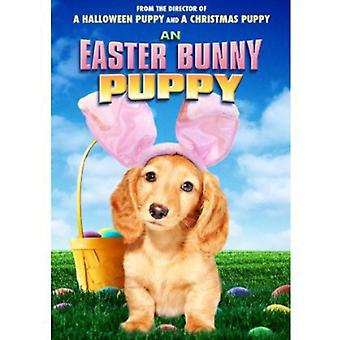 An Easter Bunny Puppy [DVD] USA import