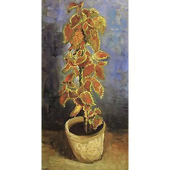 Coleus Plant i en blomsterpotte, Vincent Van Gogh, 44x22cm
