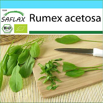Saflax - Set de regalos - 400 semillas - Orgánico - Sorrel francés - BIO - Oseille commune - BIO - Acetosa - Ecológico - Alazana - BIO - Sauerampfer