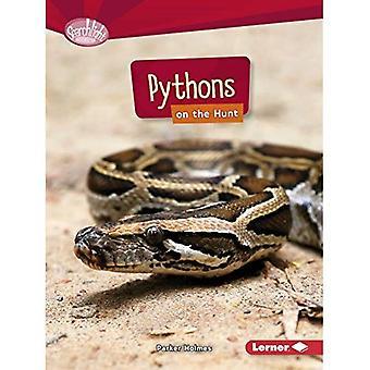 Pytonormar på jakt (Searchlight böcker rovdjur)