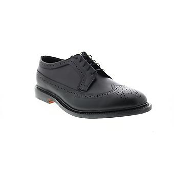 Bostonian Adult Mens No.16 Longwing Wingtip & Brogue Oxfords & Lace Ups