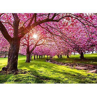 Tapet väggmålning Cherry Tree Blossom