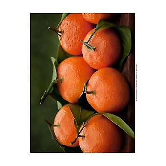 Satsuma Tangerines I Poster Print by Rachel Perry (19 x 13)