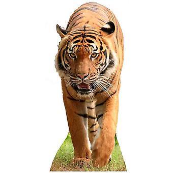 老虎 - 生活大小的纸板切口 / 支架