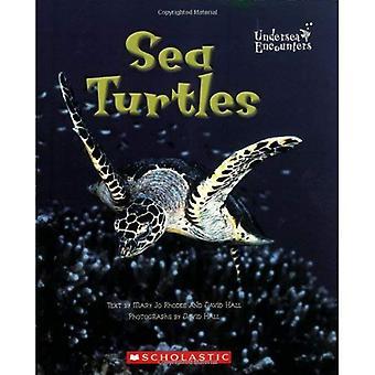 Havssköldpaddor (sjökabel möten)