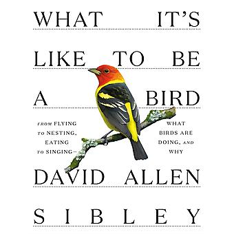 What Its Like to be a Bird by David Allen Sibley