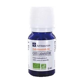 Cistus ladanifere essential oil 5 ml of essential oil
