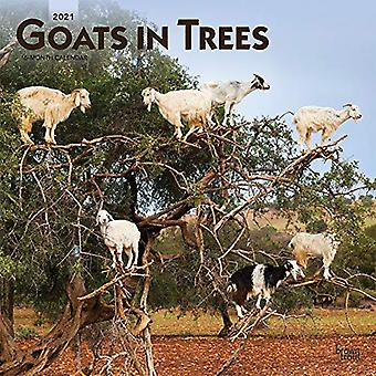 Goats in Trees 2021 Square