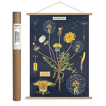 Dandelion Chart Wrapping Paper Sheet / Poster