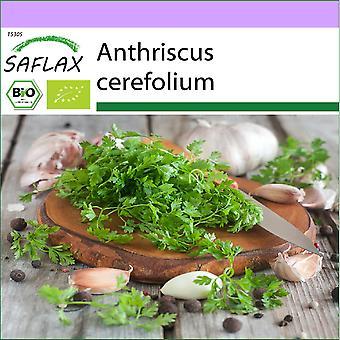 Saflax - 800 semillas - Orgánico - Chervil - BIO - Cerfeuil commun - BIO - Cerfoglio - Ecológico - Perifollo - BIO - Kerbel