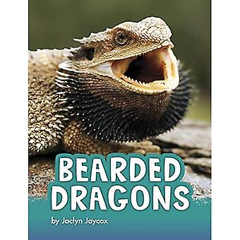 Bearded Dragons (Animals)