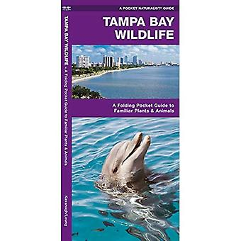 Tampa Bay Wildlife: An Introduction to Familiar Species of Marine Plants, Echinoderms, Mollusks, Crustaceans, Nearshore Fishes, Reptiles, Amphibians, and Marine Mammals