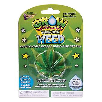 Grow Own Weed