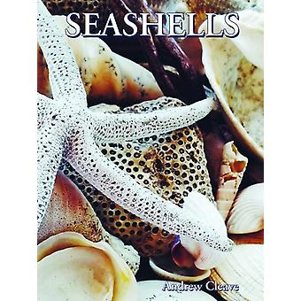 Seashells by Andrew Cleave