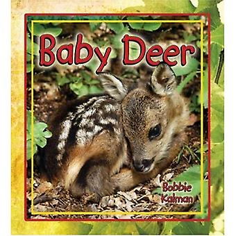 Baby Deer (It's Fun to Learn about Baby Animals)