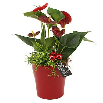 Indoor tree from Botanicly – Christmas Set – Height: 35 cm