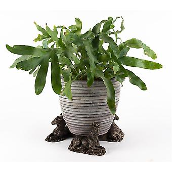 Potty Feet Donkey Foal Themed Plant Pot Feet in Antique Bronze Color Set of 3