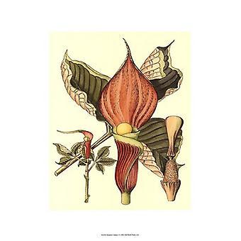 Botaniske Fantasy plakatutskrift (13 x 19)