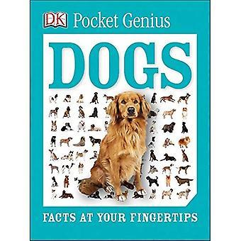 Pocket-Genie: Hunde