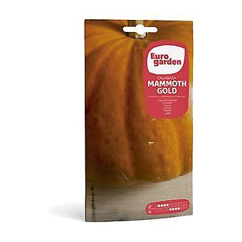 Mammoth Gold Pumpkin 3 g