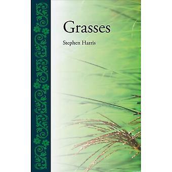 Grasses (Botanical)