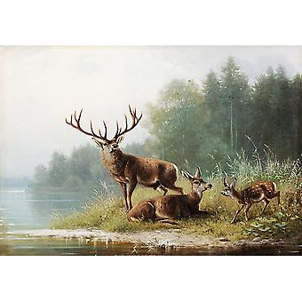 Wallpaper Art Mural Stag at a Lake by Moritz Müller