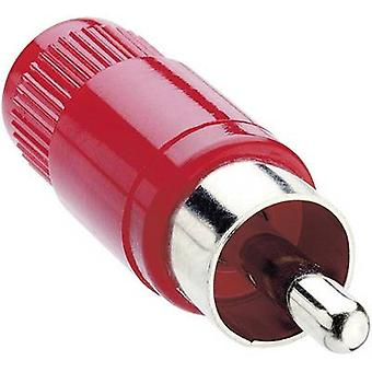Lumberg STO 1-RD RCA connector Plug, straight Number of pins: 2 Red 1 pc(s)