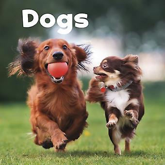 Dogs by Lisa Jo Amstutz
